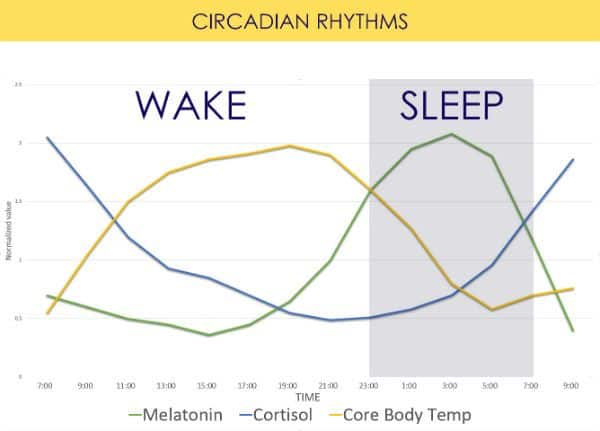 circadian-hormones